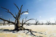 Photo of Klimaforandring: I 2050 vil 86 % af vinmarkerne ved Middelhavet være forsvundet?