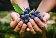 Photo of Organic Value 2019 – Vinsmagning med økologiske vine fra Italien