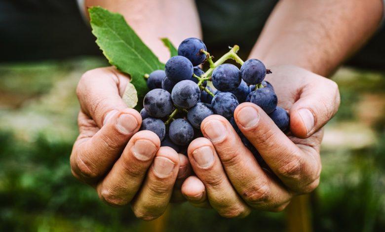 Organic Value - Økologiske vin
