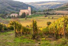 Vinmarker i Montalcino